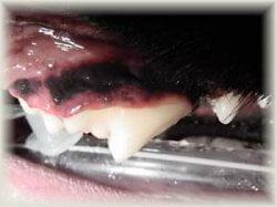 ph_Tooth_tartar_cleaned.jpg